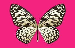 Black And White Rice Butterfly Vector On Pink Background Stock Photo