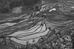 Black and White rice fields Royalty Free Stock Image