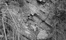 Black and white rock detail. Black white rock detail crete Stock Photo