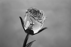 Black and white rose. Artificial rose made of metal and glass Stock Image