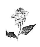 Black and white rose in ink dotted style Royalty Free Stock Photos