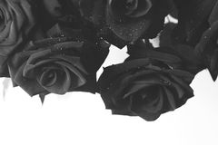 Black and white roses. Black and white composition creates a geometry with red roses on a light background Stock Image