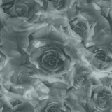 black and white roses, seamless pattern Royalty Free Stock Image