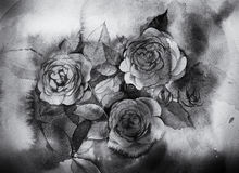Black and white roses Watercolor painting Royalty Free Stock Images