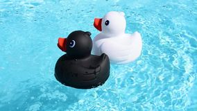 A black and a white rubber duck swimming from right to left, stock video