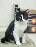 Black-and-white rural kitten Stock Photography