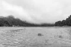 Black and White in Sao Miguel. Black white view of Lagoa Verde in Sao Miguel royalty free stock photos