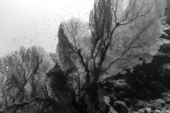 Black an white sea fan. In the red sea stock photo