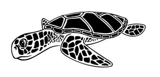 Black and white  sea turtle Royalty Free Stock Photos