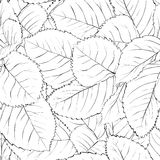 Black and white seamless background with leaves Stock Photos