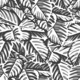Black and white seamless background with leaves Royalty Free Stock Photography