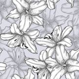 Black and white seamless background with lilies. Royalty Free Stock Photos