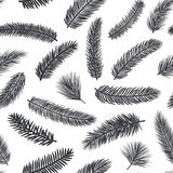 Black and white seamless pattern with fir pine evergreen conifer twigs. Branches Stock Photo