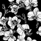 Black and white seamless pattern with hand drawing orchid flower Royalty Free Stock Image