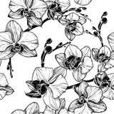 Black and white seamless pattern with orchid Stock Image