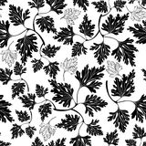 Black and white seamless pattern with  parsley. Stock Photos