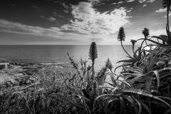 Black and white seascape with flowers. Royalty Free Stock Photo