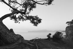 Black and white seascape  with pine-tree Stock Images
