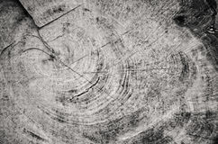 Black and white section of a cut tree stump. Dramatic view of the detail in a tree stump that has been cut Royalty Free Stock Image