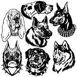 Black white set with dogs heads. Set with dogs heads icons, difference breeds,black and white images Royalty Free Stock Photo