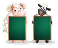 A black and a white sheep with empty blackboards Royalty Free Stock Image