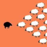 Black and white sheep. Orange background Stock Photography