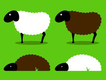Black and white sheep standing and sleeping Stock Image