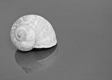 Black And White Shell. Black And White abstract shell picture Stock Image