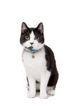 Black and white short haired cat Royalty Free Stock Images