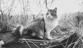 Black and white shot of beautiful cat sitting on log at lake. Black and white photo of beautiful cat sitting on log at lake Stock Photo