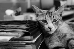 A black and white shot of a cat with old books. royalty free stock photo