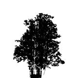 Black and White Silhouette of Deciduous Tree, whose branches dev Royalty Free Stock Photography