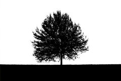 Black and white silhouette of a lonely tree Royalty Free Stock Image