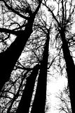 Black and white silhouette of tree heads Royalty Free Stock Photos