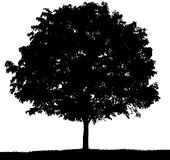 Black and white silhouette of a tree in summer. vector illustration