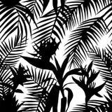 Black white seamless tropical jungle vector illustration