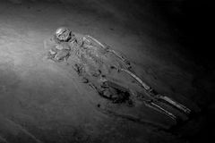 Black and white skeleton human. Black and white grave burial skeleton human bones Stock Photo