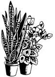Black and white sketch of houseplants