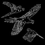 Black and white sketch 3 type macaw flying. Vector simple sketch of 3 type of macaw flying black white stock illustration