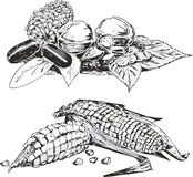 Black and white sketches of vegetables Royalty Free Stock Photography