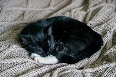 Black and white sleepy cat resting on a bed throw stock photo