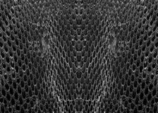 Black and white snake skin Royalty Free Stock Image