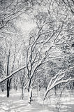 Black and white snow covered winter trees. Blue sky at background Royalty Free Stock Image