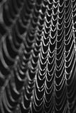 Black And White Spider Web In Autumn Stock Photos