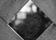 Black and White Spiderweb. The light of the setting sun reflects perfectly off of each individual strand of some lucky spider's beautiful web. I see it stock images