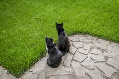 Two curious cats sitting next to each other in garden. A black and a black and white spotted kitten sitting close on the garden stone path, green grass stock images