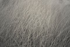 Black and white of  spring grass background in the garden Royalty Free Stock Photo