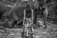 Black&white stående av en mer tamer förförisk elefant Royaltyfri Foto