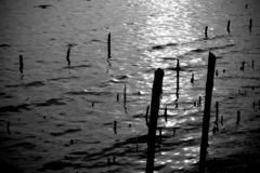 Black and white the sticks arranged. In water stock photo