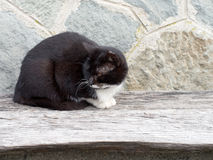Black and white stray cat on bench by wall. Stock Photography